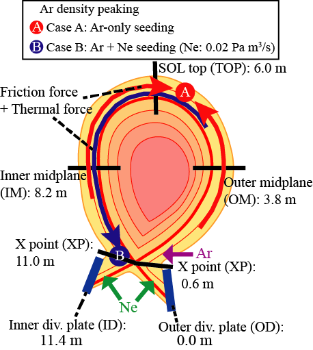 Schematic view of Ar density peaking location and direction of force acting on Ar in (A)Ar-only and (B)Ar+Ne seeding cases. In Ar-only seeding case, Ar ions are trapped at the top of the SOL plasma due to thermal force, leading to an increase of core Ar density. In contrast, in Ar+Ne seeding case, Ar ions are transported towards inner divertor region due to friction force. Locations of Ar and Ne seeding are also indicated. Parallel distance of OD, XP, OM, TOP, IM and ID from outer divertor plate along fluxtube 0.8mm outside separatrix at OM projected to poloidal plane are also shown and will be used in Fig. 2.